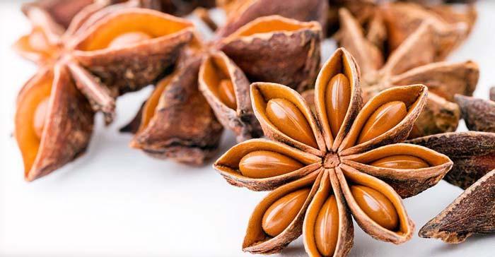 Лечебные свойства специи бадьян, в какие блюда ее добавляют и в чем отличие от аниса
