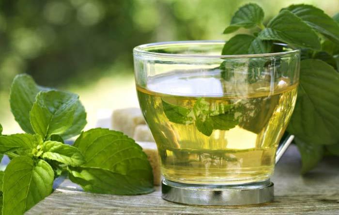 Чай из базилика: лечебные свойства и противопоказания, правила заваривания