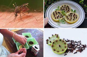 Лимон и гвоздика от комаров и клещей