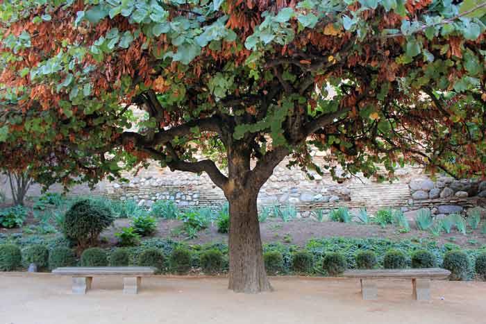 Кэроб (высушенный плод рожкового дерева)