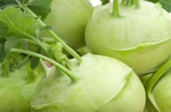 Польза капусты кольраби