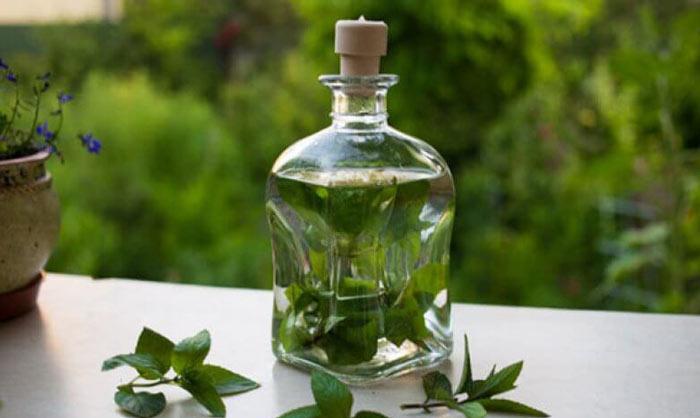 Мелисса (трава): лечебные свойства и противопоказания, применение в качестве приправы