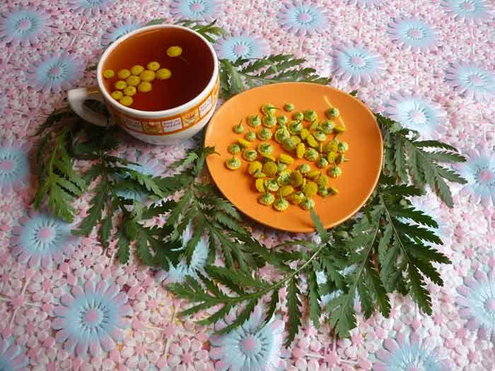 Чай из цветков пижмы