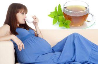 Чай мяты беременным