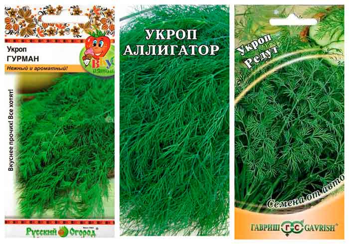 Укроп для выращивания дома