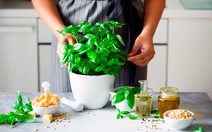 Выращивать базилик в горшке